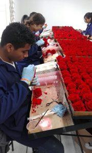 Rosas Preservadas Montaje 00