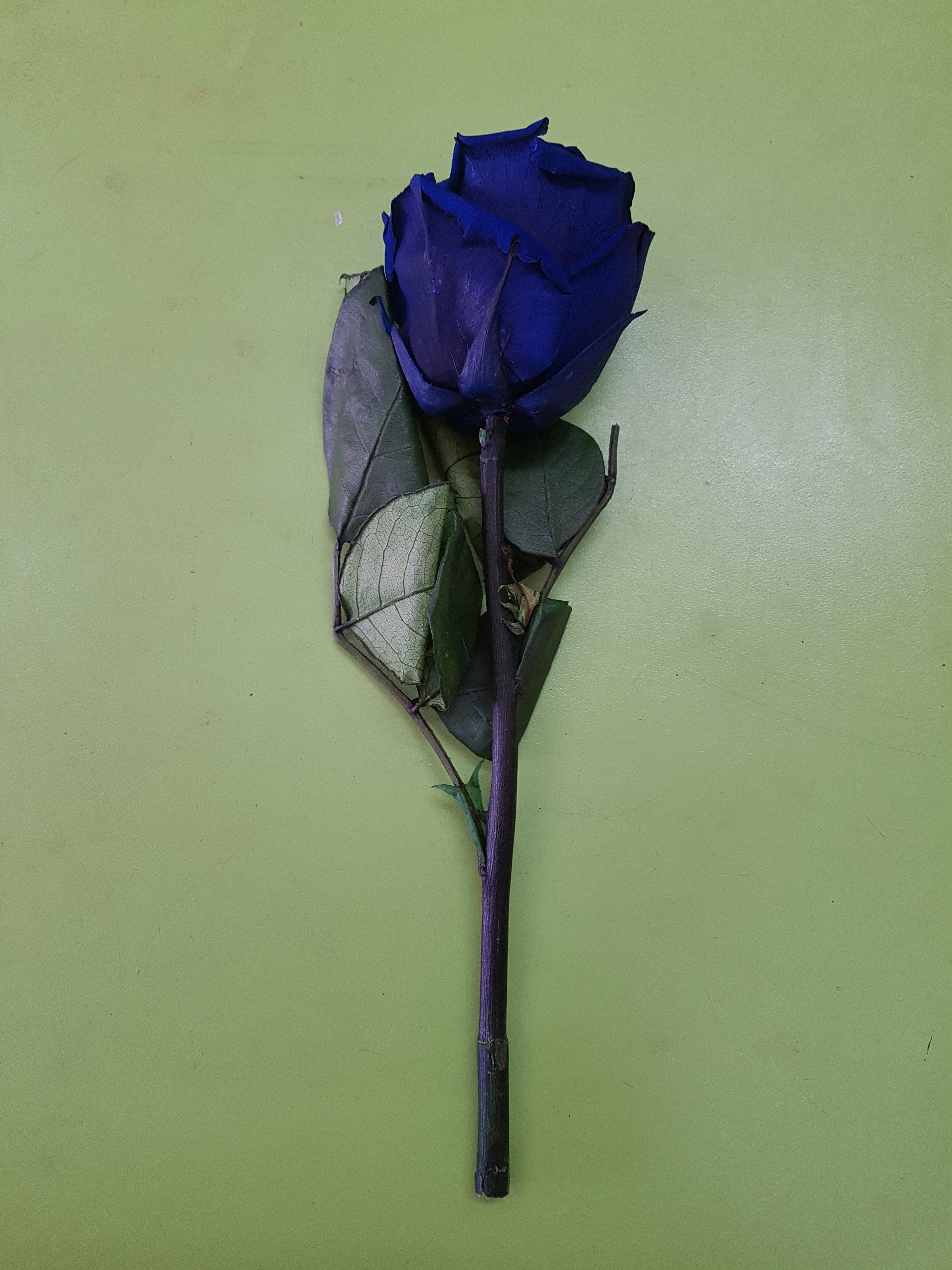 rosas azules preservadas al por mayor con tallo