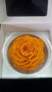 Rosa preservadas en color naranja tamaño XL