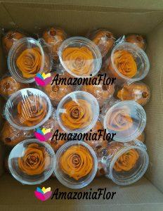 Rosas-eternas-Naranja