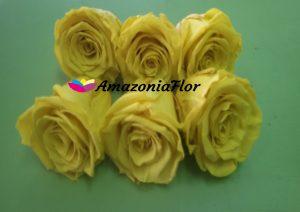 rosas-eternas-amarillas