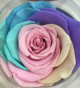 Rosas eternas arcoíris