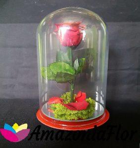 Cúpula Rosa eterna