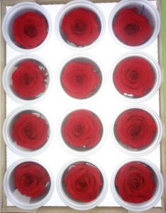Rosas eternas. Rosas preservadas. Tamaño MINI
