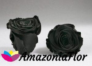 Rosas eternas negras