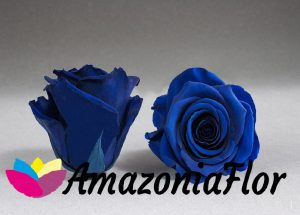 Rosas eternas azules