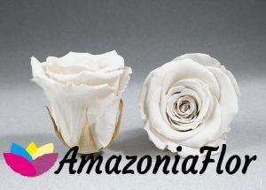 rosas eterna blanca