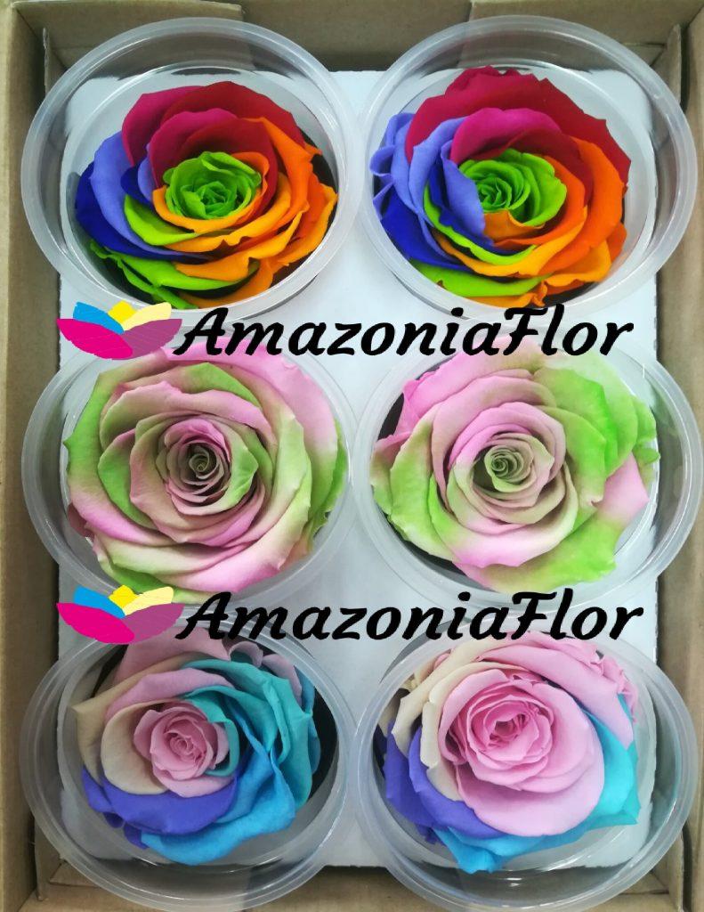 rosas eternas arco iris