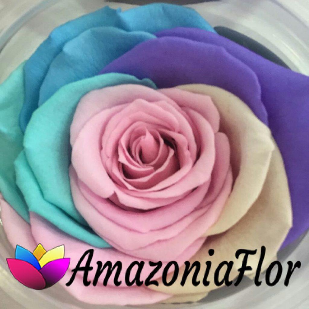 Rosa eterna arco iris