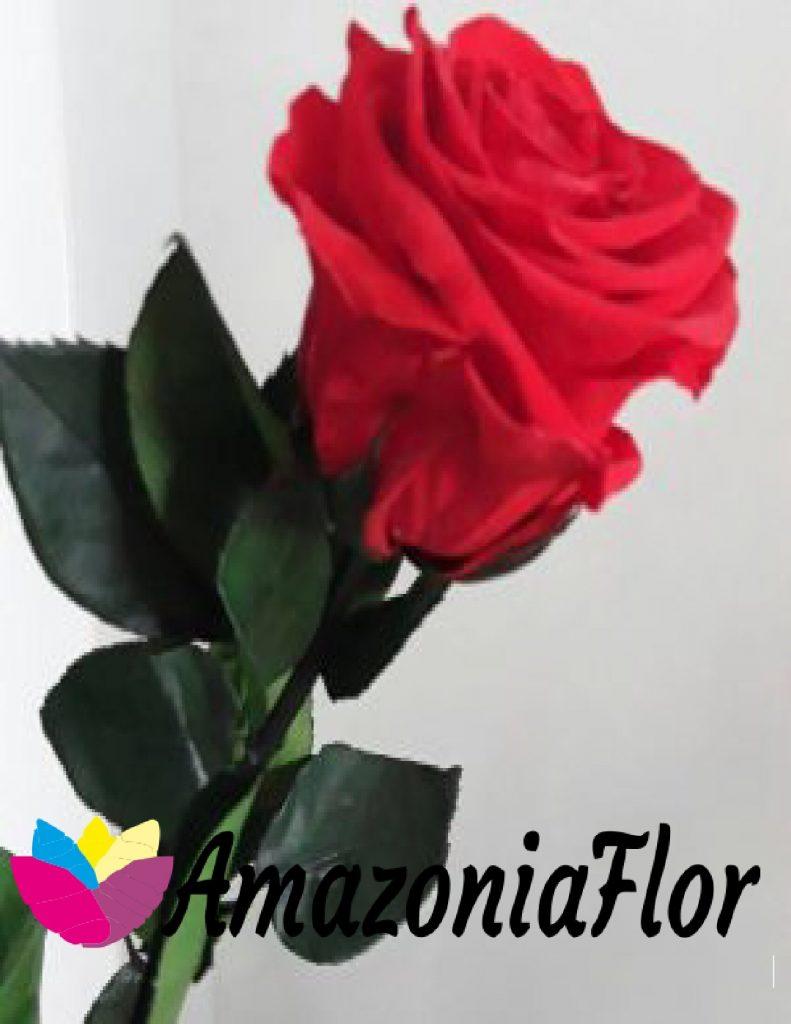 rosas eternas amazoniaflor